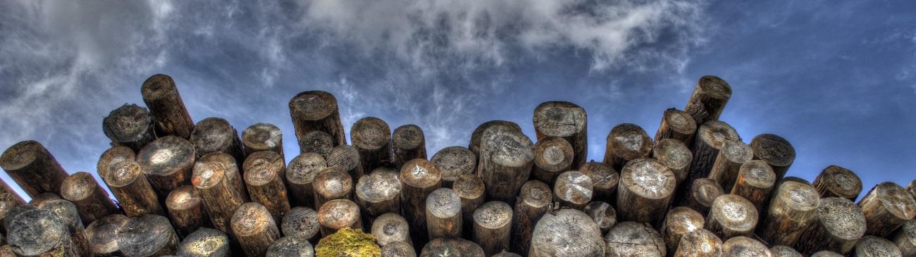 Holzfeuchtemesser